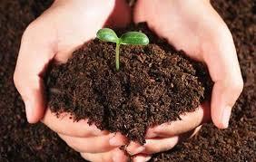 Shyam Samruddhi is an Organic Fertilizer Liable to 5% GST: Maharashtra AAR