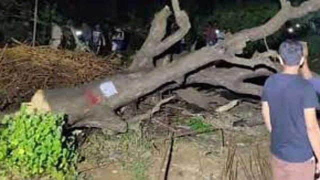 Supreme Court Asks Maharashtra Govt Not to Cut Any More Trees at Mumbai's Aarey